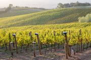 Chinese tariffs put pause on vineyard expansion