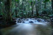 From waterfall to water bottle: A tranquil rainforest retreat with a lucrative side hustle