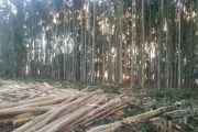Forestry plantations near Melbourne tipped to sell for more than $20m