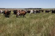 Canadians swallow Gippsland dairy farms