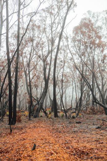 Domain_Bushfires_-_Blue_Mountains_43_vmfvt2
