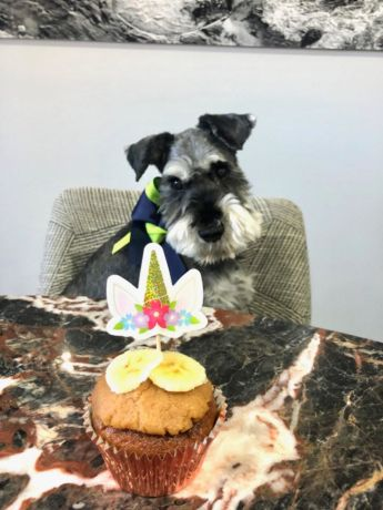 Angus the dog turns 14. For story on pets in apartments.