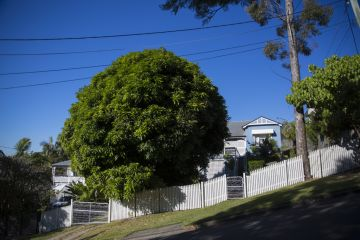 'Watered down': Queensland's new laws could see some landlords sell