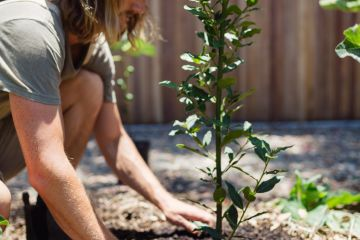 These are the five easiest fruit trees to grow, other than lemons