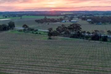 Chinese-owned Burge adds shiraz vineyard to Barossa holdings