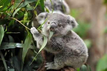How to help animals in your backyard after a bushfire