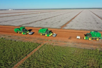 Harvard offloads cotton and almond farms for $120m