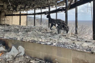'Half-full' hotels count cost of bushfires