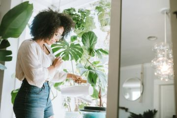 How to take care of your houseplants in summer