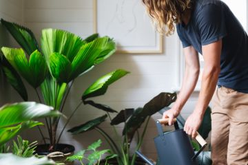 From watering to feeding: This is how to keep your indoor plants alive