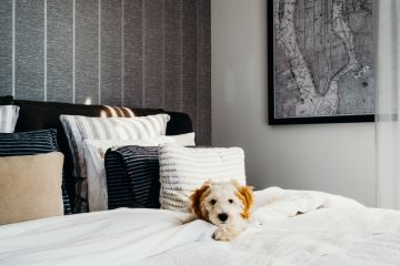 How to have a home that is both dog-friendly and stylish