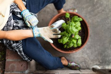 Eight jobs to do in the garden before the end of summer
