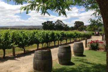'Absolutely heaving': without international tourists, locals are rediscovering this wine region