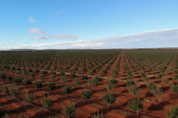 NSW almond orchard tipped to fetch $30m
