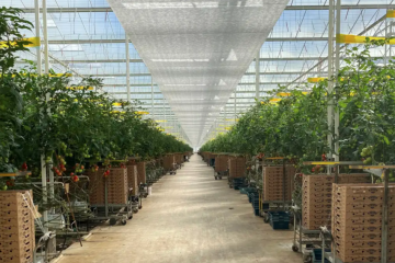 Roc Partners offers $200m veggie glasshouse as sale-and-leaseback