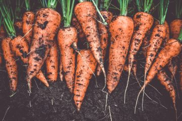 Growing your own food at home? Get your soil tested for lead