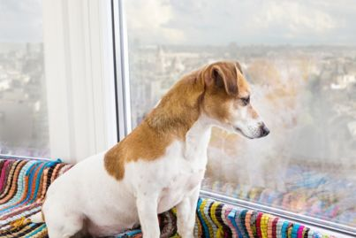 Pets are allowed in Sydney apartment buildings - so what now?