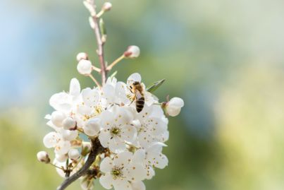 Bee the solution: How you can care for the planet by nurturing our bee population