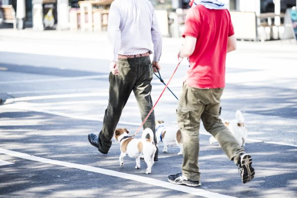 The Sydney areas with the most pet-friendly rentals