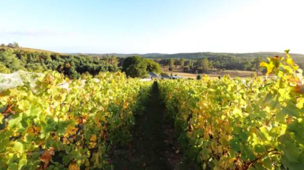 Vineyard values have