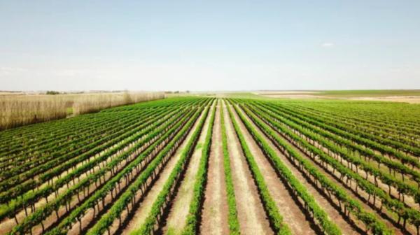 Laguna fund manager Tim McGavin lists big Riverland vineyard