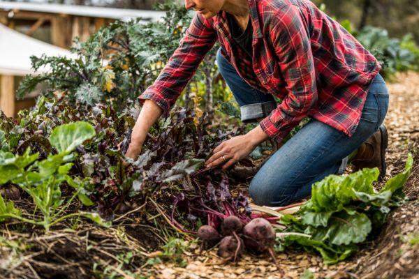 Crisis Gardening The Australians Creating Sustainable Veggie Gardens During Covid 19