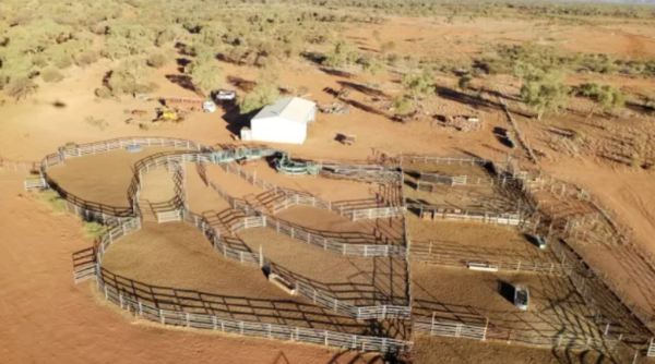 NT farmers buy adjoining cattle stations for $38.5m