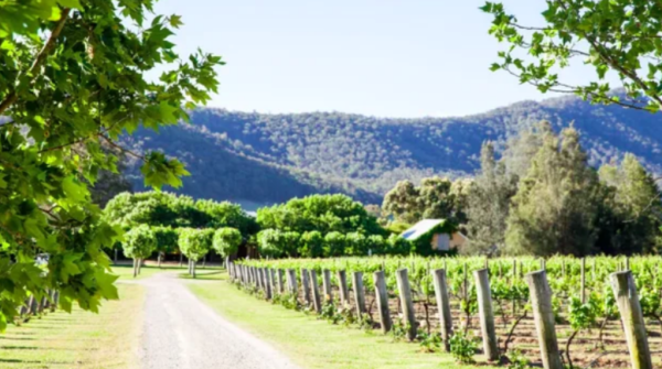 Hunter Valley vineyards fly out the door