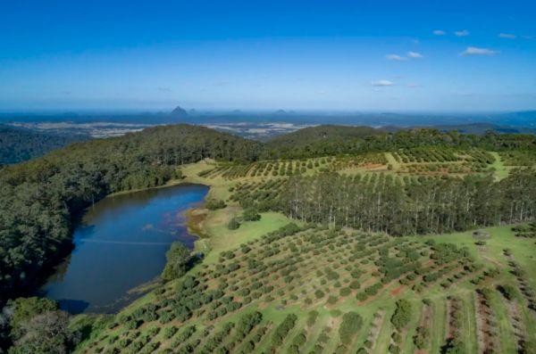 Smashing it: Avocado farms gobbled up despite price slump