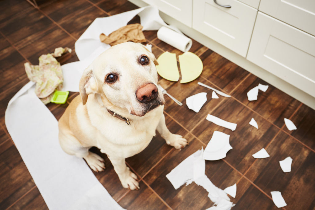 Dog in mess at home