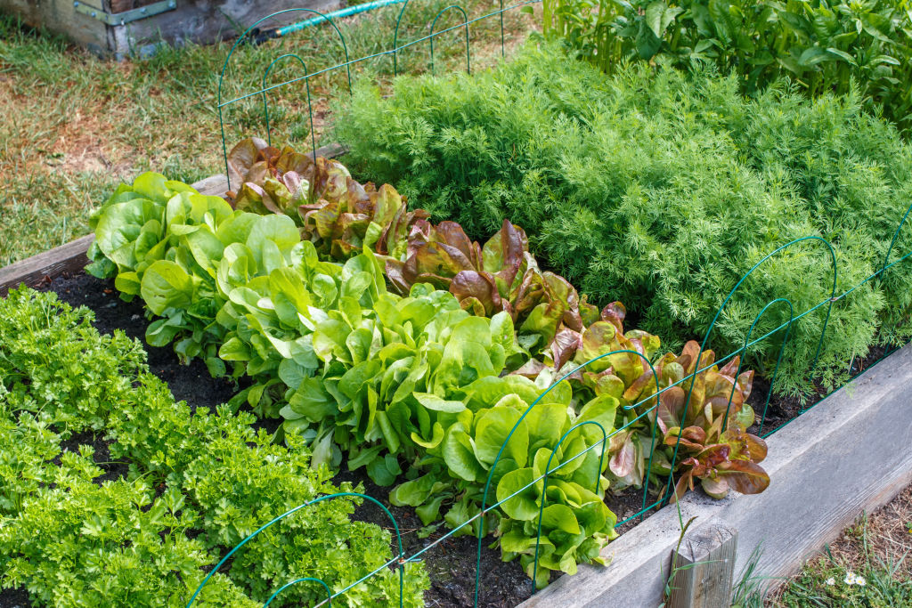 Smaller gardens require more careful planning.