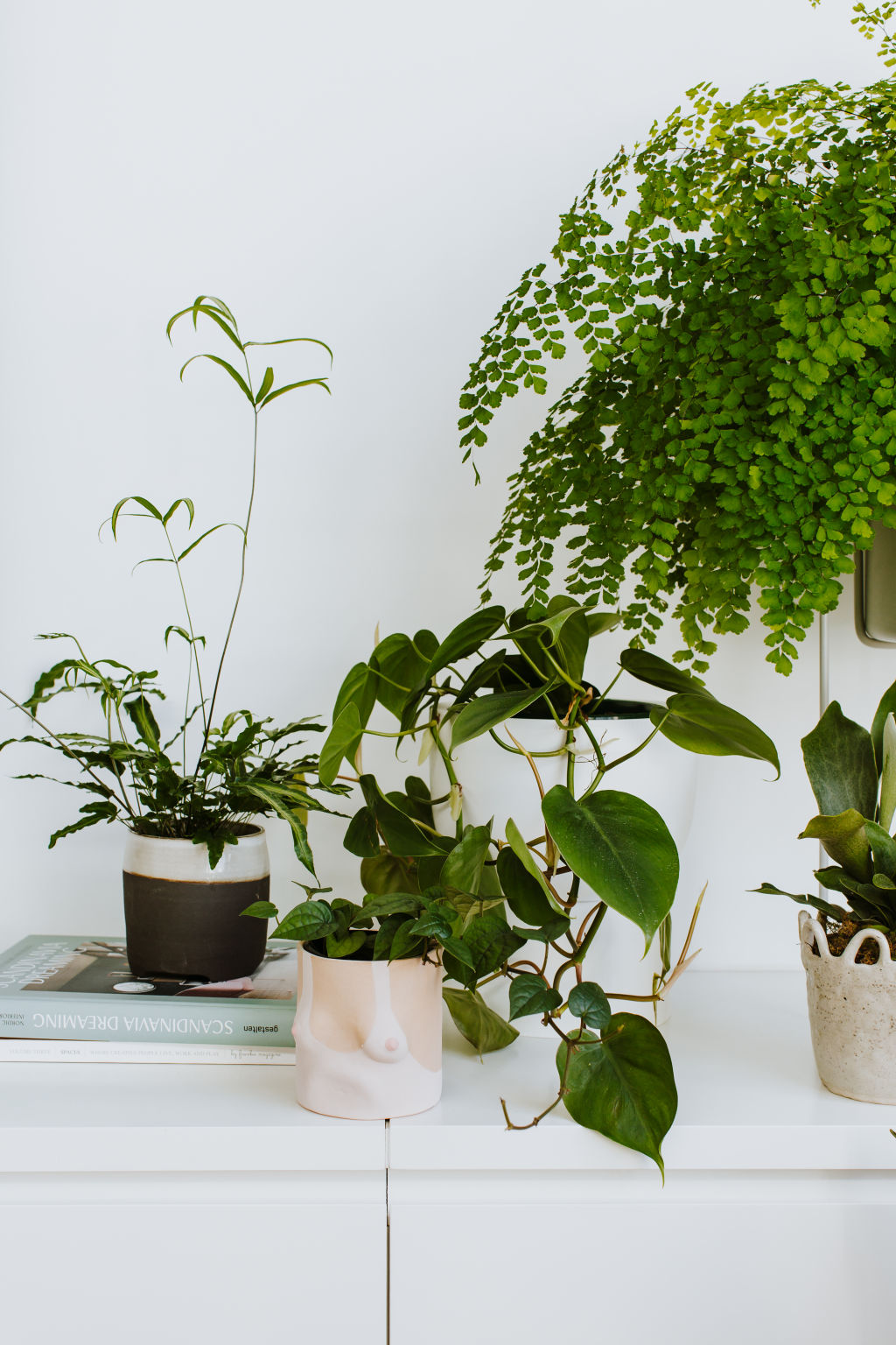 Leaf_Supply_Clovelly_by_Luisa_Brimble-110__ctyapk