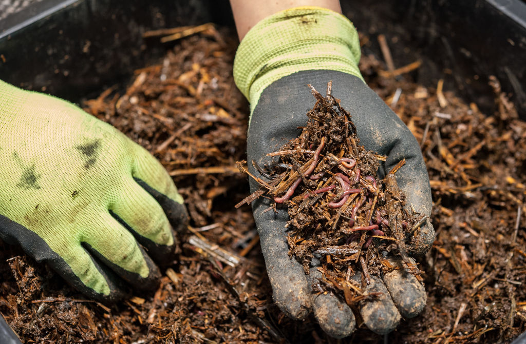 Red wriggler worms are the species typically used in worm farms. Earthworms burrow through the soil aren't suitable for worm farms.