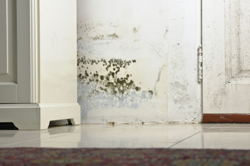 Mould patches may be hidden behind furniture.