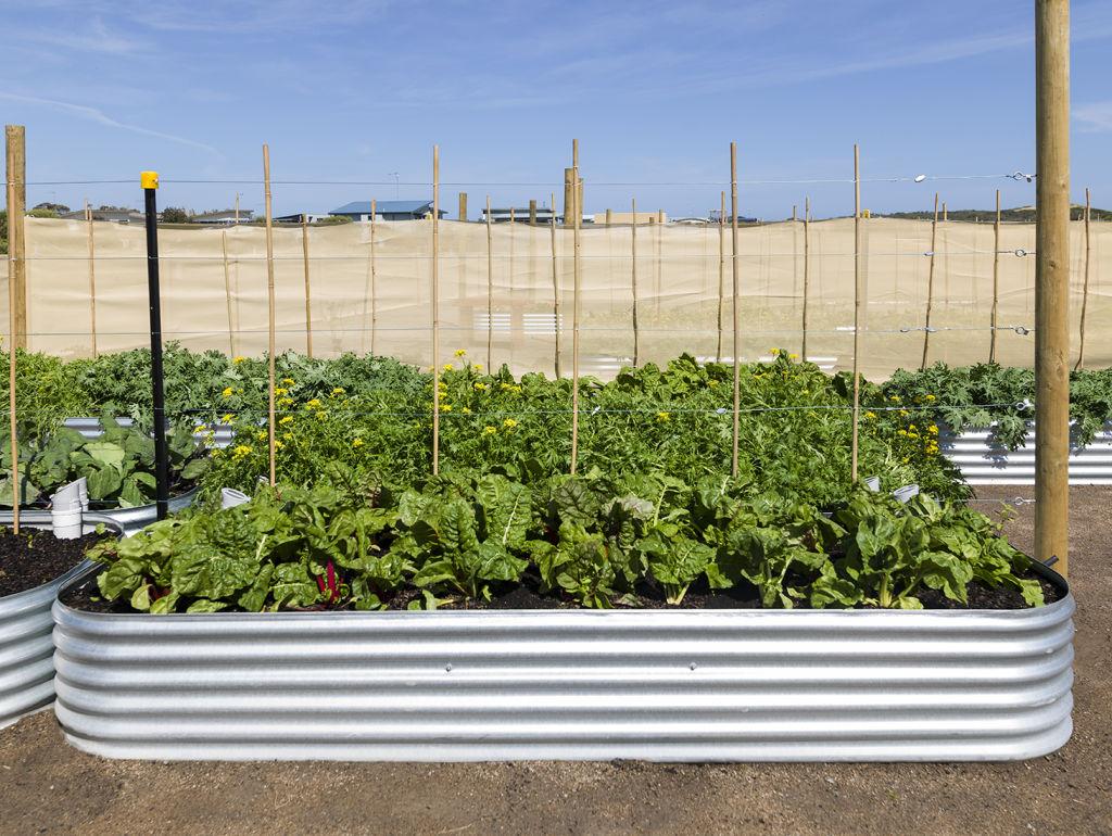 Urban_farm_2_at_The_Cape_s1ksmd