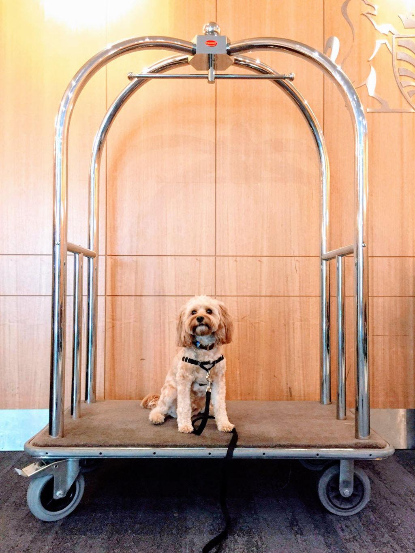 dogfriendlyhotels2