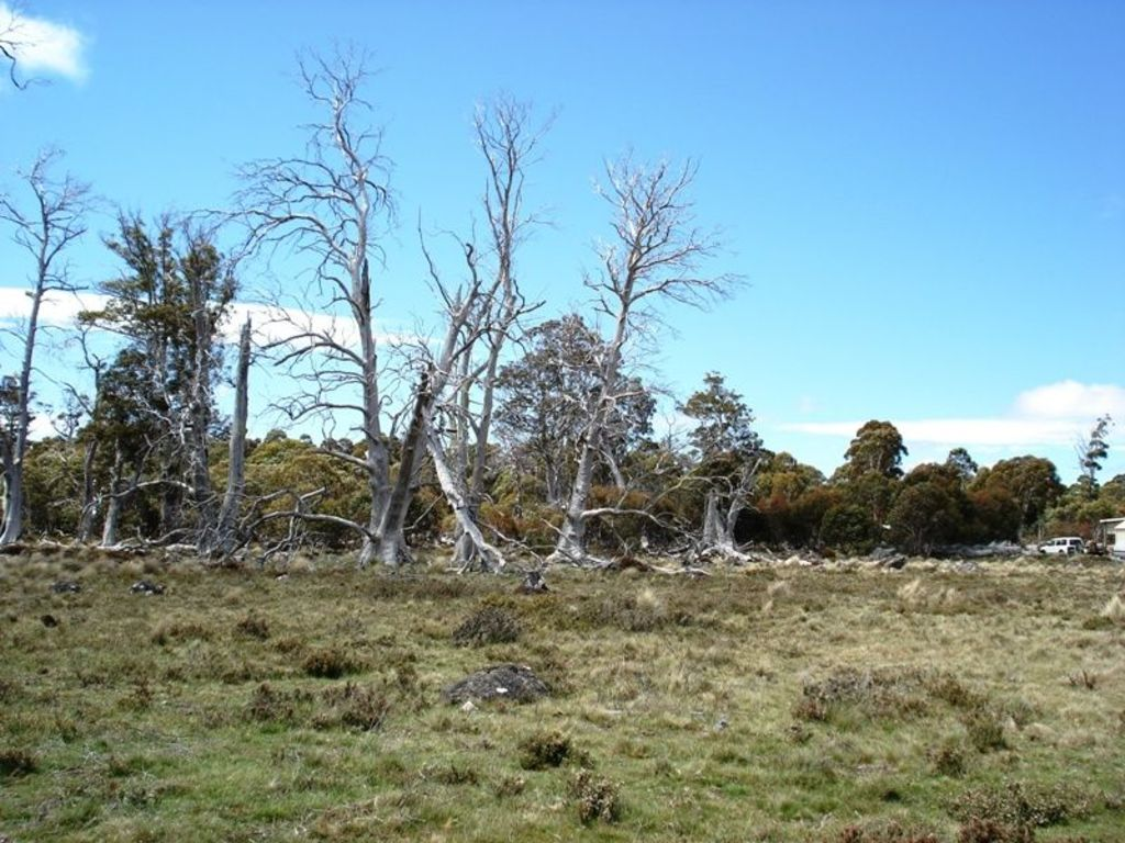 Lot 36,67 Arthurs Lake Road, Wilburville, is on the market for $30,000.