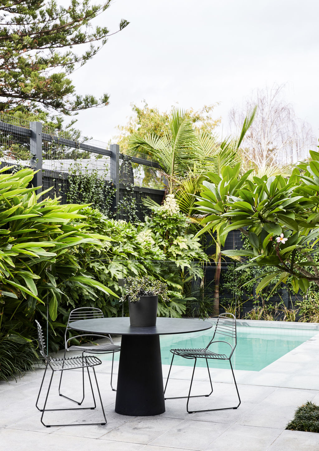 Frangipani tree, 'Yes you can grow them in Melbourne!' says Cara. Moooi Container outside table. Tait outdoor chairs. Landscape design by Ric Day. Styling: Annie Portelli.