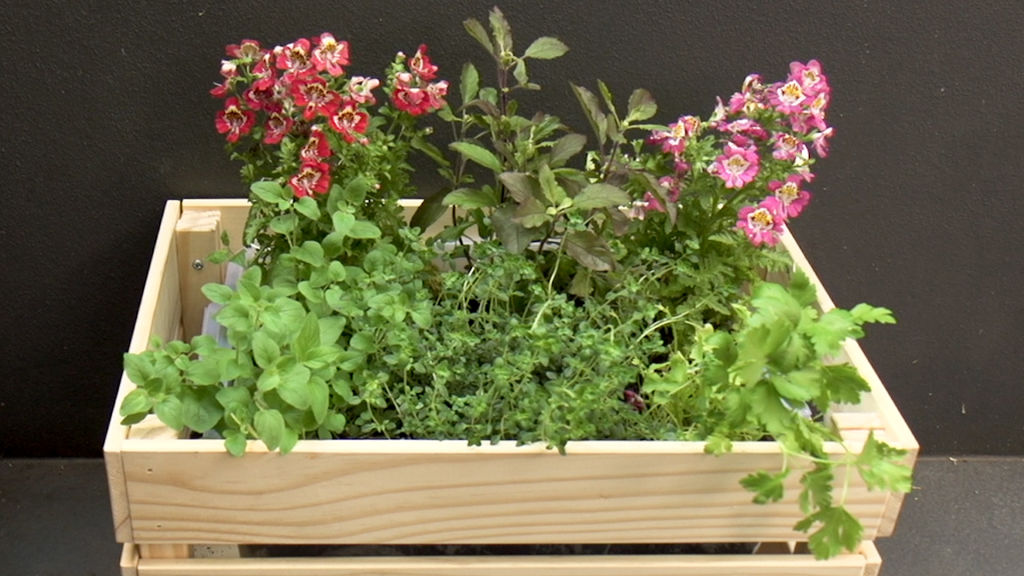 The self-watering planter features a reservoir in the base to keep plants hydrated.
