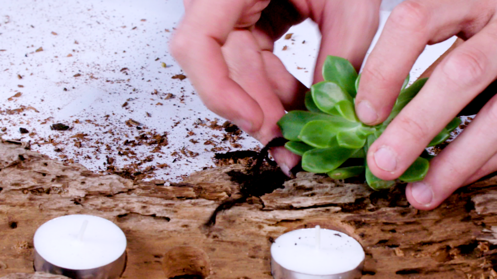 Insert succulents into each hole with a small amount of potting mix.