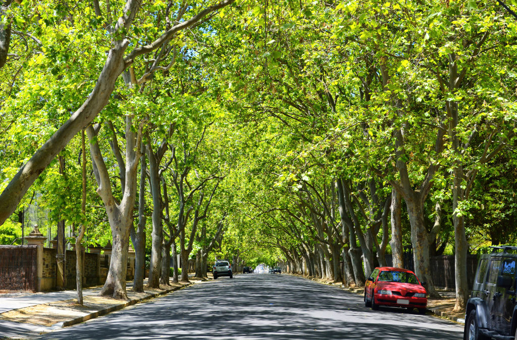 Scenic Victoria Avenue in Unley Park SA