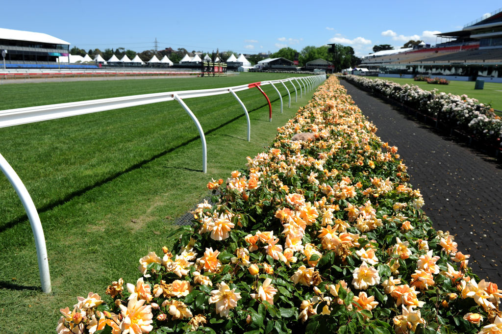 Roses at Flemington for Cup week  - The apricot coloured crepuscule hedge.