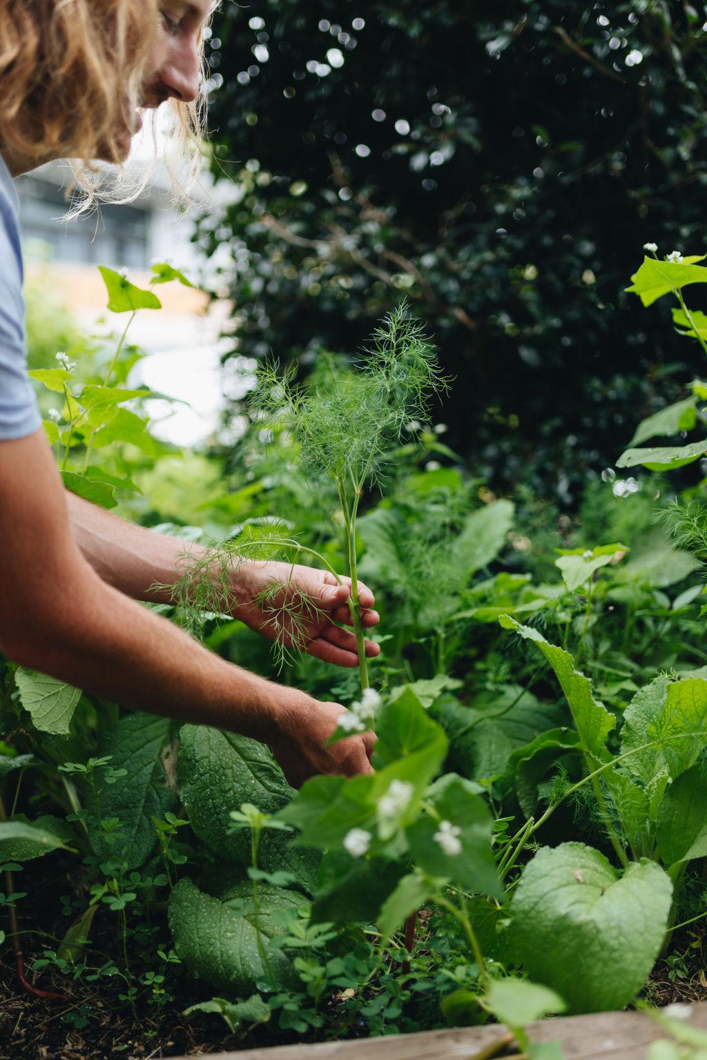 Gardening by Byron Smith