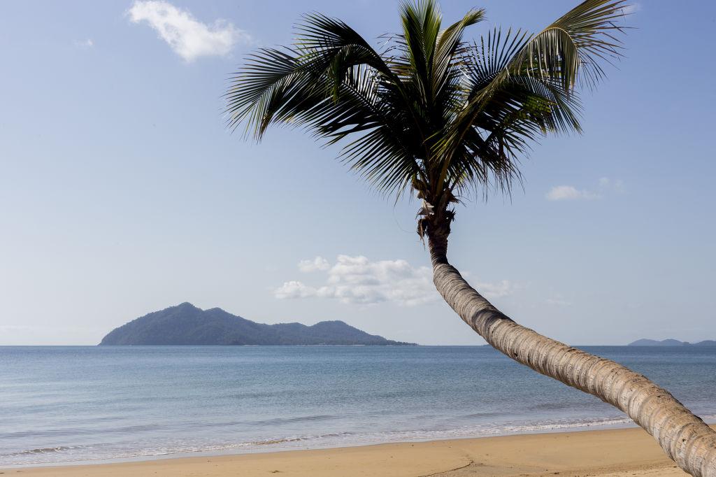 Domain-palm-tree-beach-Dunk-Island-view_rnm95s