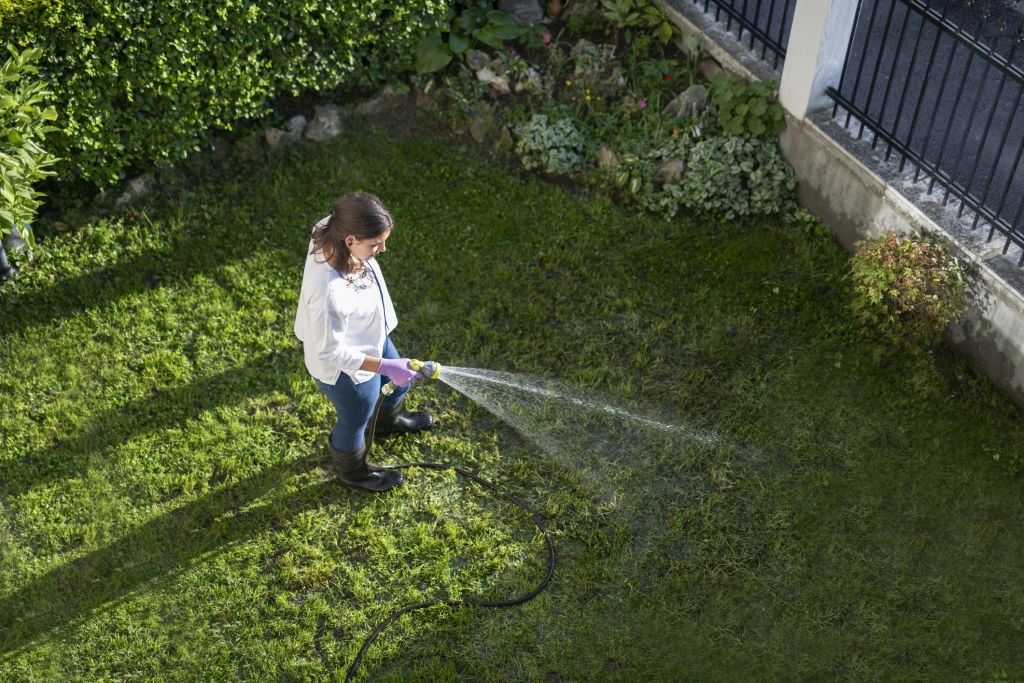 Check water restrictions in your area before watering lawns.