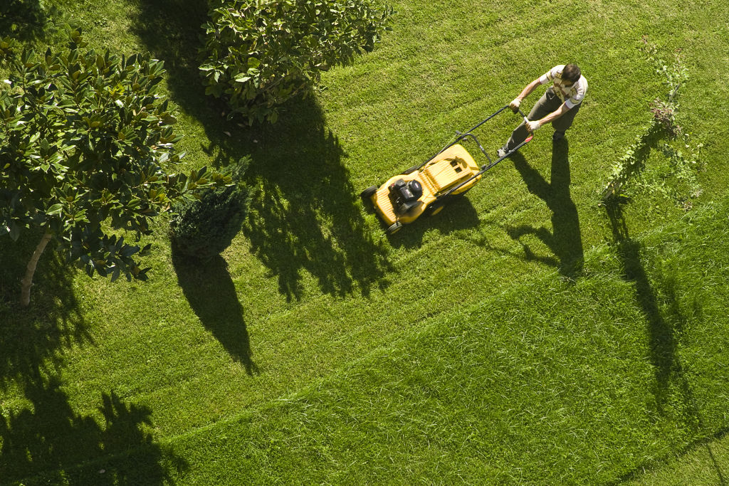 Don't set the mower blade too low, or you'll risk damaging the lawn.