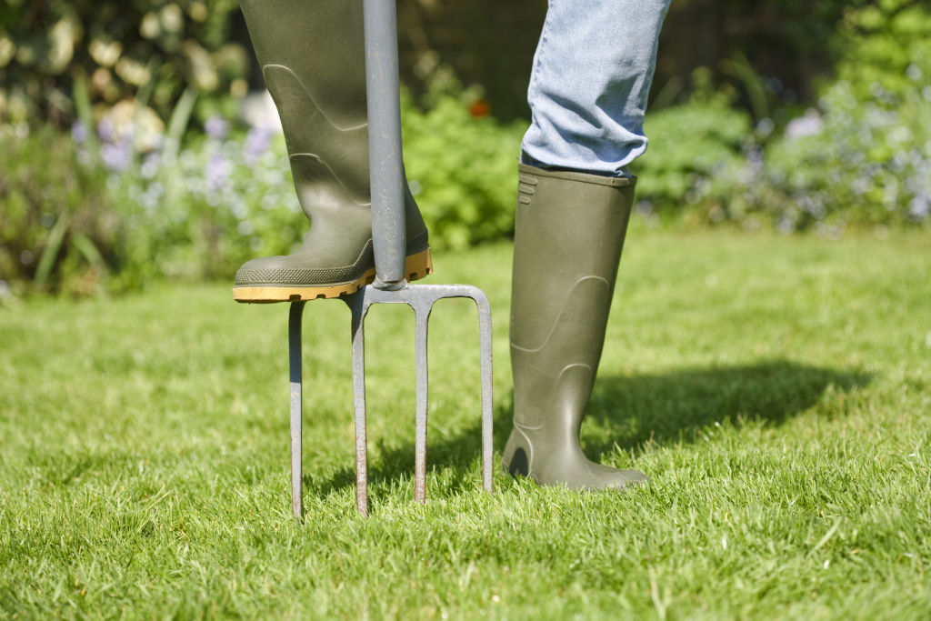 A garden fork is all that's required to aerate small lawns, but a lawn aerator may be best for large lawns.