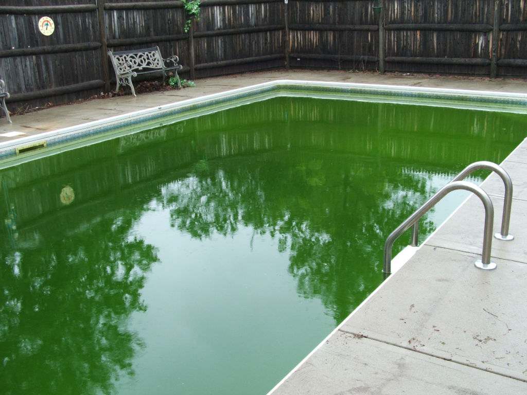 A green pool at the start of summer is depressing, but a few days' work can whip it into shape.