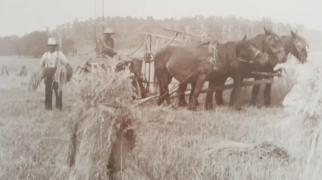 horses-harvest