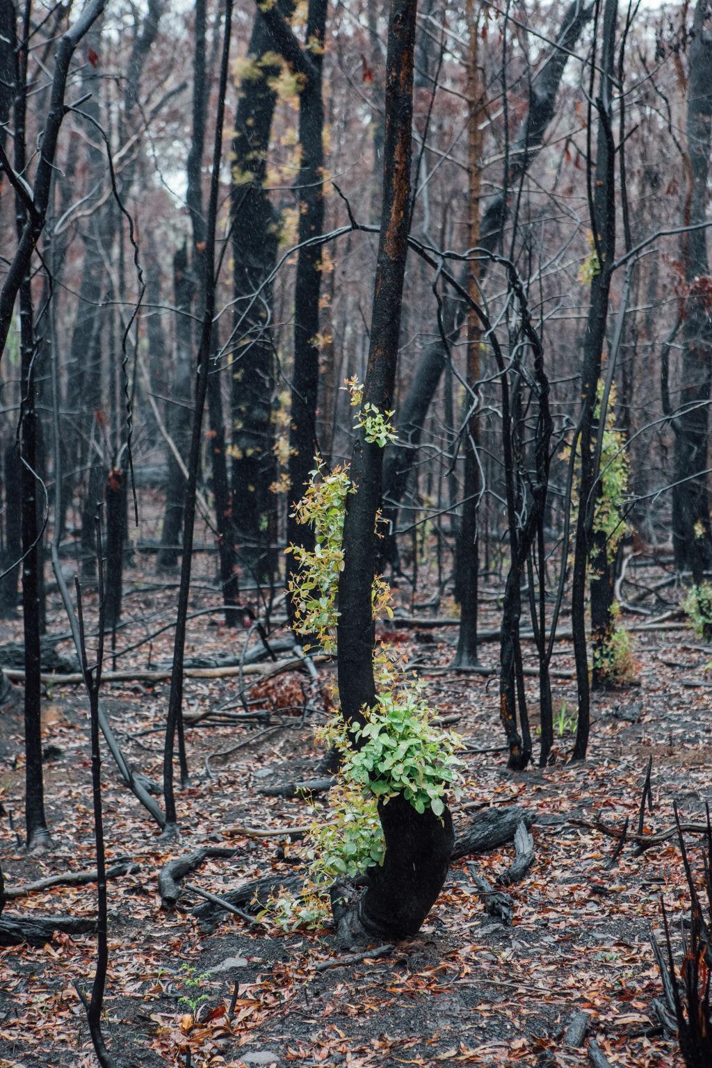 Domain Bushfires - Blue Mountains